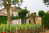 Chateau Bourgneuf Vayron vineyard with intensely red rose bushes at the end of each row of vines Pomerol Bordeaux Gironde Aquitaine France