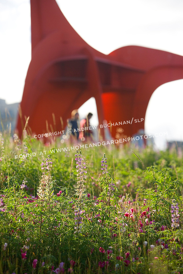 early morning sunlight illumintaes the native wildflowers blooming in the Meadow portion of the park, backed by the park's iconic sculpture, Alexander Calder's 'Eagle', 1971