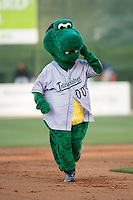 Kannapolis Intimidators mascot Tim E. Gator runs the bases between innings of the game against the Hickory Crawdads at Kannapolis Intimidators Stadium on April 7, 2016 in Kannapolis, North Carolina.  The Crawdads defeated the Intimidators 5-1.  (Brian Westerholt/Four Seam Images)