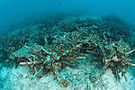 Artificial reef using ceramic snowflakes help rejuvenate the dead reefs of El Nido. The 1998 El Nino caused a massive scale coral bleaching to this tourist town that used to have pristine coral reefs.