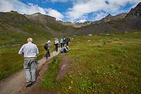 Trail to Gold Core Lake through subalpine heath tundra, Alaska at Independence Mine State Historical Park
