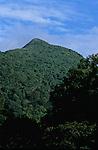 Morne diablotins forests<br /> <br /> pentes du Morne Diablotins Ile de la Dominique.