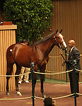 12 September 2010.  Hip #14 A.P. Indy - Balance colt, sold as the sale topper at the Keeneland September Yearling Sale's first session, for $4,200,000.   Consigned by Mill Ridge.
