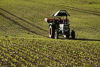 GERMANY barley field in Scheggerott / Deutschland Feld mit jungen Gerste Pflanzen