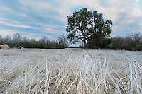 Grass ice covered after ice rain, Dinero, Lake Corpus Christi, South Texas, USA