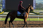 ARCADIA, CA  OCTOBER 31. Breeders' Cup Turf entrant Anthony Van Dyck, trained by Aidan P. O'Brien, exercises in preparation for the Breeders' Cup World Championships at Santa Anita Park in Arcadia, California on October 31, 2019.  (Photo by Casey Phillips/Eclipse Sportswire/CSM)