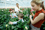 """Foto: VidiPhoto<br /> <br /> BRAKEL – Aan de slag voor Moederdag. Zodra ze kunnen lopen, mogen de kinderen van gerberakweker Marius Mans uit Brakel in de Bommelerwaard al hun eigen bosje bloemen plukken voor Moederdag. Terwijl vader Marius het 'plukteam' van afstand instrueert, stellen Rosanne (11) en Jonathan (6), Jasmijn (9) en Olivier (3) donderdag weer een """"bosje liefde"""" samen. Op een totaal van 52 miljoen stelen wordt het moederdagboeket niet gemist in de productie. Mans kweekt 32 soorten gerbera's onder 8 ha. glas. De belangstelling is enorm en de prijzen zijn hoog. Dat wordt niet alleen veroorzaakt door de grote vraag vanwege Moederdag, maar er wordt een recordaantal bloemen gekocht omdat mensen vaker thuis zitten en ze het daar gezellig willen maken."""