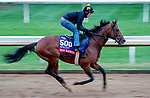 October 30, 2020: Bon Raison, trained by trainer Jack Sisterson, exercises in preparation for the Breeders' Cup Sprint at Keeneland Racetrack in Lexington, Kentucky on October 30, 2020. Scott Serio/Eclipse Sportswire/Breeders Cup/CSM