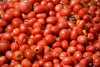 Piles of tomatoes await the start Thursday, Sept. 9, 2021, of the Tomatina, a tomato fight with historical roots in Spain, in Murphy Park in Springdale. Advanced placement Spanish language students from Springdale and Har-Ber high schools participated in the event. Visit nwaonline.com/210910Daily/ for today's photo gallery.<br /> (NWA Democrat-Gazette/Andy Shupe)