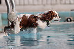 Biscuit plays at the fourth annual Pooch Plunge at the Carson Aquatic Facility in Carson City, Nev., on Saturday, Sept. 22, 2012. The Parks 4 Paws event helps raise funds for local dog projects..Photo by Cathleen Allison
