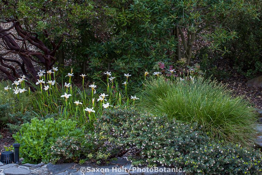 Katherine Greenberg California native plant garden with 'Canyon Snow' Iris, Arctostaphylos edmundsii, and Carex tumulicola
