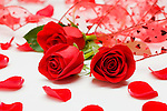 Close-up of red roses and red ribbon