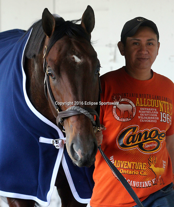 LOUISVILLE, KY - APRIL 20: Shagaf (Bernardini x Muhaawara, by Unbridled's Song) walks the barn after exercising at Churchill Downs, Louisville KY. Owner Shadwell Stable, trainer Chad C. Brown (Photo by Mary M. Meek/Eclipse Sportswire/Getty Images)