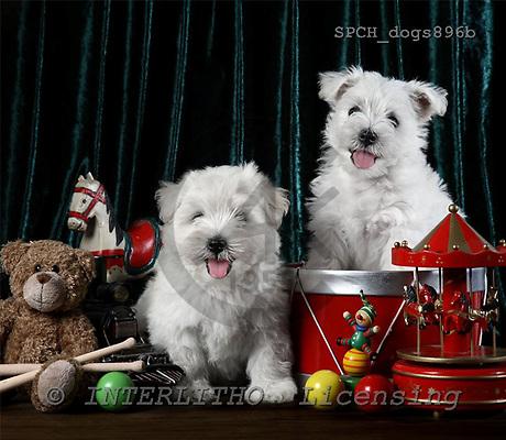 Xavier, ANIMALS, dogs, photos+++++,SPCHDOGS896B,#a# Hunde, perros
