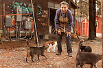 January 2, 2013. Pittsboro, North Carolina.. Siglinda Scarpa plays with some of the cats outside the main refuge building where there is over an acre of fenced in grounds for the hundreds of cats to play and roam. . Siglinda Scarpa, originally from northern Italy, runs the Goathouse Refuge, a no kill shelter for cats. Scarpa, who is also a ceramic artist, runs the shelter with 5 full time employees and currently has over 260 cats in the refuge..