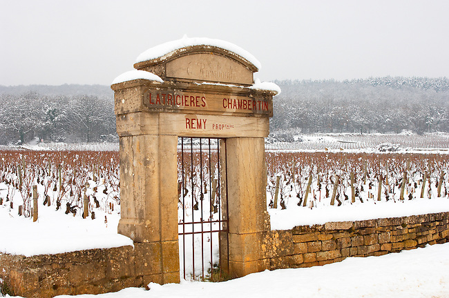 vineyard gate in the snow. Chambertin Clos de Vin - Cote D'or, beaune, France.