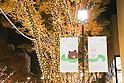 Christmas illuminations on Zelkova trees alongside Omotesando in Tokyo