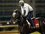 LOUISVILLE, KY -APR 25: Gotta Go, who was on the Kentucky Derby trail, exercises at Churchill Downs, Louisville, Kentucky. (Photo by Mary M. Meek/Eclipse Sportswire/Getty Images)