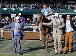 LEXINGTON, KY - APRIL 09: #6 Brody's Cause and jockey Luis Saez with connections coming onto the turf course for the winner's circle presentation after winning the 92nd running of the Toyota Blue Grass (Grade 1) $1,000,000 at Keeneland race course for owner Albaugh Family Stable (Dennis Albaugh) and trainer Dale Romans. April 9, 2016 in Lexington, Kentucky. (Photo by Candice Chavez/Eclipse Sportswire/Getty Images)