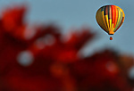 Air balloons over the vineyard of Napa Valley..