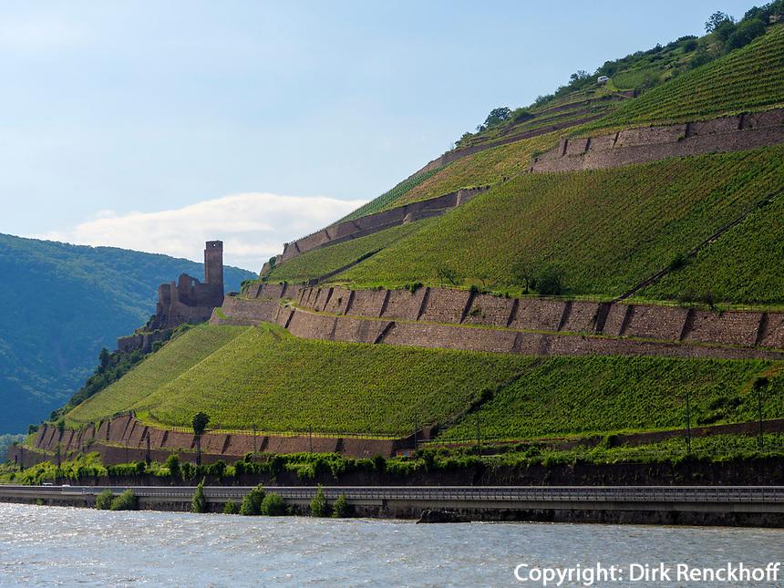 Ruine Burg Ehrenfels am Rhein, Hessen, Deutschland, Europa, UNESCO Weltkulturerbe<br /> ruin castle Ehrenfels at river Rhine, Hesse, Germany, Europe