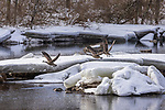 Canada geese on the Chippewa River in northern Wisconsin.