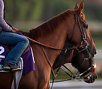October 28, 2019 : Breeders' Cup Turf entrant United, trained by Richard E. Mandella, exercises in preparation for the Breeders' Cup World Championships at Santa Anita Park in Arcadia, California on October 28, 2019. Carolyn Simancik/Eclipse Sportswire/Breeders' Cup/CSM