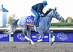 November 3, 2020: Jessica Morgan/Eclipse Sportswire/Breeders Cup: Harvey'S Lil Goil, trained by trainer William I. Mott, exercises in preparation for the Breeders' Cup Distaff at Keeneland Racetrack in Lexington, Kentucky on November 3, 2020.