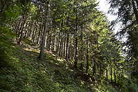FOREST_LOCATION_90116