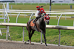 January 16, 2016:  International Star with Miguel Mena up is in the lead during the Louisiana Stakes race at the Fairgrounds race course in New Orleans Louisiana. Steve Dalmado/ESW/CSM