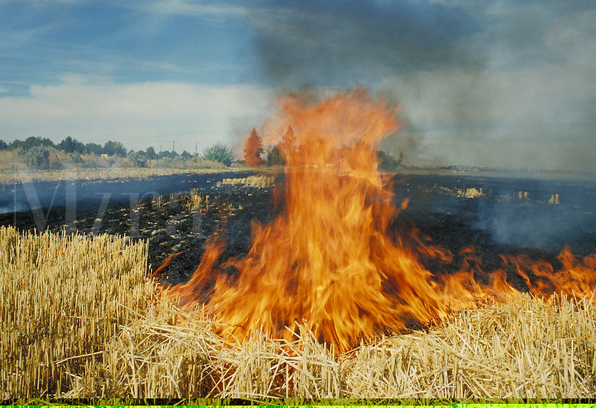 overview of wheat field stubs being progressively engulfed in fire. hot, smoke, agriculture, burn, flames, burning. Idaho.