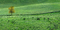 Farm pasture panorama with lone tree, Reading, Vermont, USA.