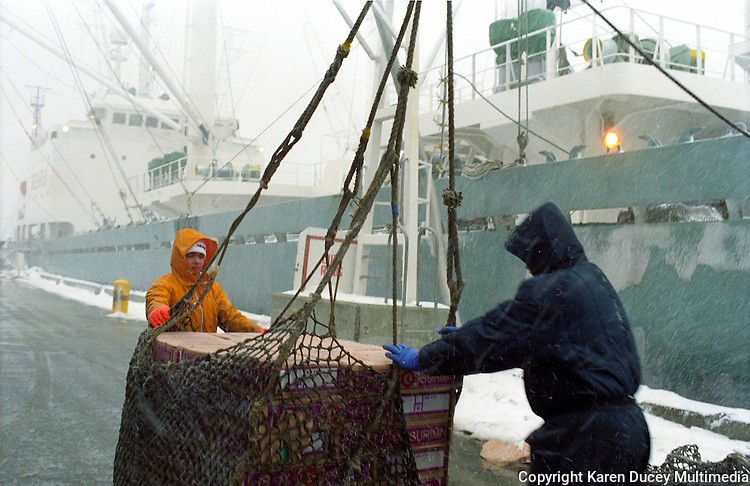 A crewman loads boxes of pollock, also known as surimi, in a brailer from the dock to a tramper, M/V Kashiwagi in Dutch Harbor, Alaska in February 1996. Trawl catcher vessels initially catch the fish in larges nets which drag along the ocean floor.  It is then brought back to port, processed in a seafood processing plant and delivered to trampers who ship the product around the world.