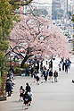 Tokyo bans partying beneath cherry blossoms in Ueno Park