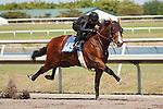 #149Fasig-Tipton Florida Sale,Under Tack Show. Palm Meadows Florida 03-23-2012 Arron Haggart/Eclipse Sportswire.