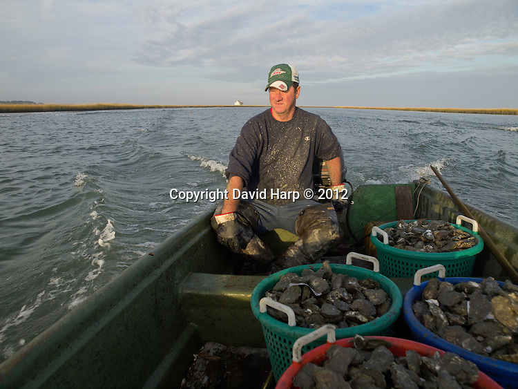 Tony Thornes and Arnold Ray Evans, pick oysters from a rock in Gargatha Inlet on Virginia's seaside.