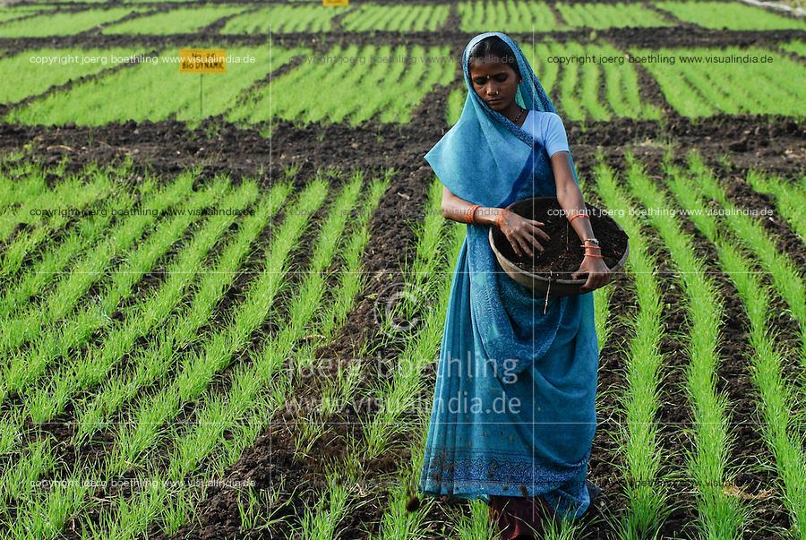 INDIA Madhya Pradesh , organic cotton project bioRe in Kasrawad  , woman applies compost in wheat field of biore experimental farm, wheat as part of crop rotation with cotton and soya | INDIEN Madhya Pradesh , Frau verstreut Kompost in Feld mit jungem Weizen, Weizen ist Teil der Fruchtfolge mit Baumwolle und Soya , biore Projekt fuer biodynamischen Anbau von Biobaumwolle in Kasrawad