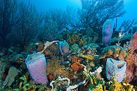 Coral and sponge scenic<br /> Grenadines