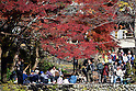 Autumn colours draw crowds to Ome in west Tokyo