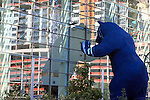 Giant blue bear peeks into the window of Denver's Convention Center. The 40 ft tall sculpture was installed in 2005