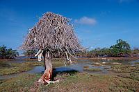 Dead tree and salt lake, Netherland Antilles, Caribbean, Atlantic, Bonaire, Bonaire