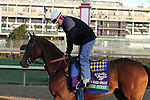 Irish Gypsy , trained by Bob Baffert and to be ridden by Martin Garcia , exercises in preparation for the 2011 Breeders' Cup at Churchill Downs on October 31, 2011.