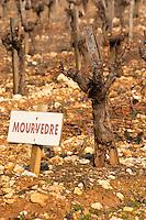 Mourvedre vine and sign at La Truffe de Ventoux truffle farm, Vaucluse, Rhone, Provence, France