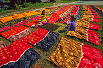 An array of brightly coloured fabric is left out in the sun to dry.  The freshly dyed cloth was laid out to dry for five to six hours, covering an entire kilometre.<br /> <br /> More than 500 people work to produce the hand-made garments, in a village where nearly 90 per cent of the population are dependant on the industry.  These photos were taken by amateur photographer Ratul Dhar in the village of Banti, Bangladesh.  SEE OUR COPY FOR DETAILS.<br /> <br /> Please byline: Ratul Dhar/Solent News<br /> <br /> © Ratul Dhar/Solent News & Photo Agency<br /> UK +44 (0) 2380 458800