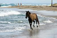 Dominikanische Republik, Pferde am Strand von Cabarete an der Nordküste