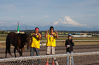 Indian Relay Horse Racing, Muckleshoot Gold Cup 2016, Emerald Downs, Auburn, Washington, USA.