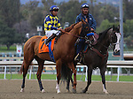Chitu and Martin Garcia in the post parade before the Grade 2 Robert B. Lewis Stakes at Santa Anita Park in Arcadia, California on February 8, 2014. (Zoe Metz/ Eclipse Sportswire)