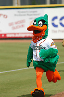 Down East Wood Ducks mascot Dewd (11) running between innings during a game against the Salem Red Sox at Grainger Stadium on April 16, 2017 in Kinston, North Carolina. Salem defeated Down East 9-2. (Robert Gurganus/Four Seam Images)