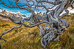 Twisted and burned beech (Nothofagus sp.) snag and Paine Massif, Torres del Paine National Park, Chile<br /> <br /> Canon EOS 5DS R, Zeiss Distagon T* 2.8/15 ZE lens, f/13 for 1/5 second, ISO 100