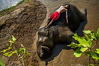 Mahout Kalu Say was born in a Karen elephant camp 18 years ago to a family that have been mahouts for generations. At the same time, elephant Pho Khwar was born a couple of miles away in the jungle. When they were both eight years old, the elephant calf was captured. The two have grown up together ever since, like brothers. Kalu Say's special relationship with Pho Khwar is based on loving kindness, not the iron hook. He tames his beastly friend with food, talk, and gentle touch. Here, the two rest by the river after taking a bath.